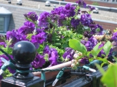 petunias and rail good