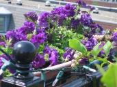 petunias and rail good